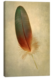 Toile  Green parrot feather - Jaroslaw Blaminsky