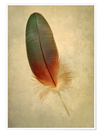 Jaroslaw Blaminsky - Green parrot feather