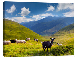 Tableau sur toile  Herd of sheep and goats in the mountains