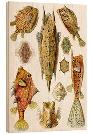 Tableau en bois  Ostraciontes cowfish species - Ernst Haeckel