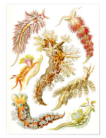 Poster Nudibranches