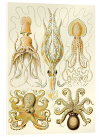 Verre acrylique  Squid and octopi - Ernst Haeckel