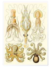 Poster  Squid and octopi - Ernst Haeckel