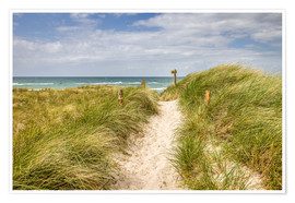 Poster Path in the dunes on the German Baltic Sea