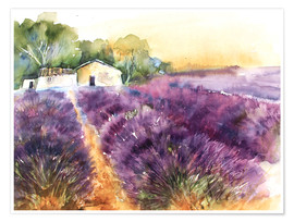 Poster  Lavender field in Provence - Eckard Funck