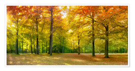 Poster Autumn Forest Panorama in sunlight