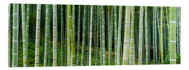 Tableau en verre acrylique  Green bamboo forest in Kyoto, Japan - Jan Christopher Becke