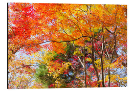Alu-Dibond  Colorful autumn leaves in the forest - Jan Christopher Becke