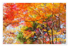 Poster Colorful autumn leaves in the forest