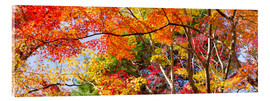 Verre acrylique  Colorful forest in autumn as Panorama - Jan Christopher Becke