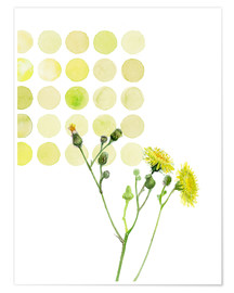 Poster Field Sowthistle in dots
