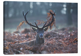 Toile  Deer stag in the brushwood - Alex Saberi