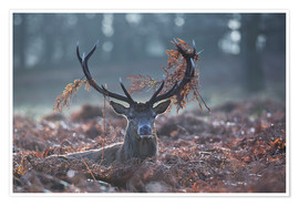 Poster Deer stag in the brushwood