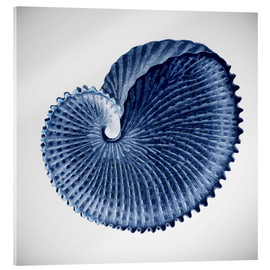 Verre acrylique  Seashell - Mandy Reinmuth