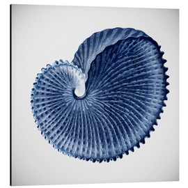Alu-Dibond  Seashell - Mandy Reinmuth