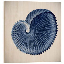 Bois  Seashell - Mandy Reinmuth