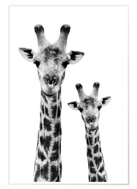 Poster  Collection safari, girafe et son petit - Philippe HUGONNARD