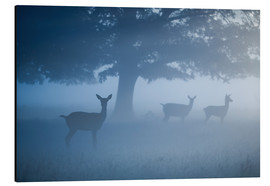 Tableau en aluminium  Deer in mist - Alex Saberi