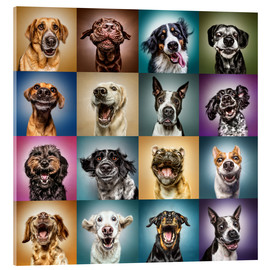 Verre acrylique  Funny (Dog) Faces - Manuela Kulpa