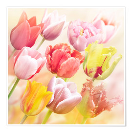 Poster  Various tulips