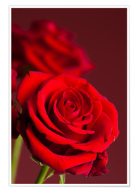 Poster Rose rouge