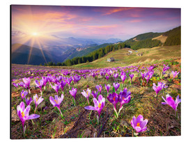 Alu-Dibond  Crocuses and the sun in spring