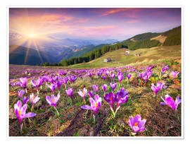Poster  Crocuses and the sun in spring