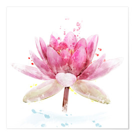 Poster  Pink Waterlily Flower