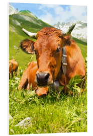 Forex  Cow with bell on mountain pasture