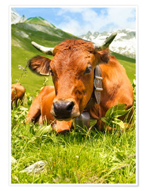 Poster  Cow with bell on mountain pasture