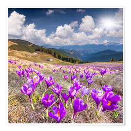 Poster Crocuses in a mountain landscape