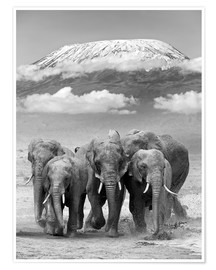 Poster  Elephant herd with Kilimanjaro
