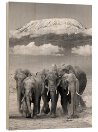 Bois  Elephant herd with Kilimanjaro