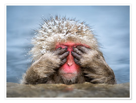 Poster Japanese Macaque in a hot spring