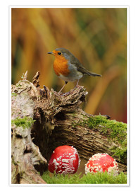 Poster  Robin in the fairy forest - Uwe Fuchs