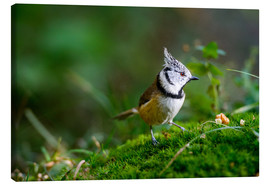 Tableau sur toile  Cute tit standing on the forest ground - Peter Wey