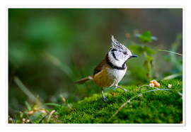 Poster  Cute tit standing on the forest ground - Peter Wey