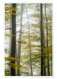 Poster Foggy forest in autumn foliage