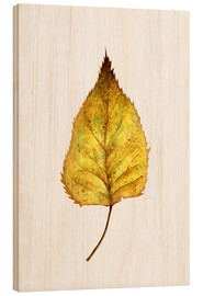 Bois  Birch Leaf - RNDMS