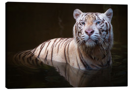 Toile  Tiger bathing