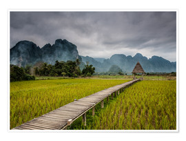 Poster  way in paddy field 2 - Sebastian Rost