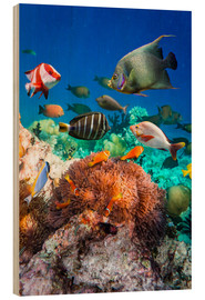 Tableau en bois  Coral reef in the Maldives