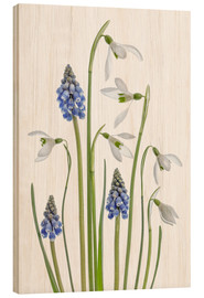 Tableau en bois  Snowdrops and Muscari - Mandy Disher