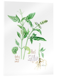 Verre acrylique  Herbs & Spices collection: Basil - Verbrugge Watercolor