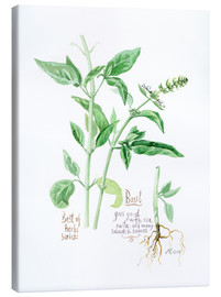 Toile  Herbs & Spices collection: Basil - Verbrugge Watercolor