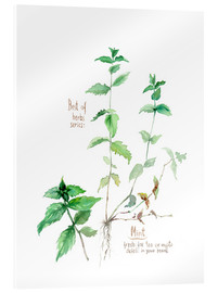 Verre acrylique  Herbs & Spices collection: Mint - Verbrugge Watercolor