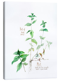 Tableau sur toile  Herbs & Spices collection: Mint - Verbrugge Watercolor