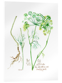 Verre acrylique  Herbs & Spices collection: Dill - Verbrugge Watercolor