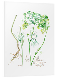 Tableau en PVC  Herbs & Spices collection: Dill - Verbrugge Watercolor