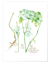 Poster Herbs & Spices collection: Dill